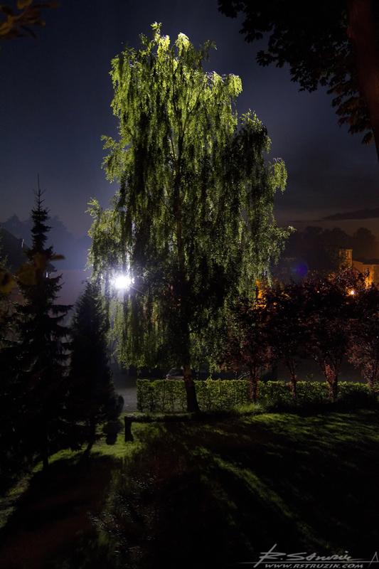 Gniezno, teren Archidiecezji Gnieźnieńskiej. Zwykłe drzewo - niezwykły efekt.